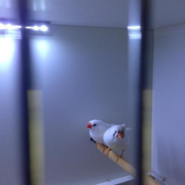Led verlichting vogels - huntingad.com